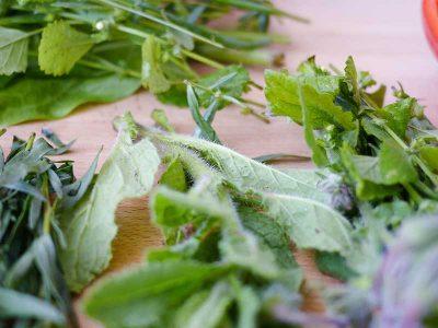 culinary-herbs-1